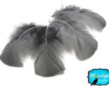 Grey Turkey Feathers, 100 Feathers - GREY Turkey T-Base Plumage Body Feathers 0.50 oz. : 145