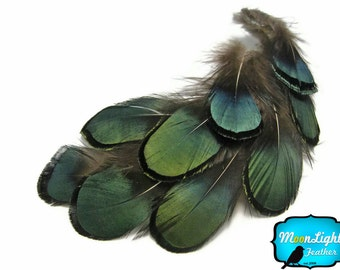 100 Pieces - GREEN BRONZE Lady Amherst Pheasant Plumage feathers  bulk pack 0.10 oz. : 492