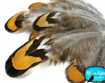 Pheasant Feathers, 1 pack - GOLDEN YELLOW Reeves Venery Pheasant Plumage feathers 0.10 oz : 356