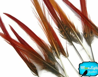 Pheasant feathers, 10 Pieces - Golden Pheasant Red Tips Loose Feathers: 272