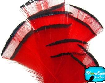 Pheasant Feathers, 1 DOZEN - RED Golden Pheasant Tippet Neck Feather: 463