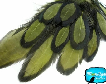 Hair Drop Feathers, 1 Dozen - OLIVE Laced Hen Loose Saddle Feather : 540