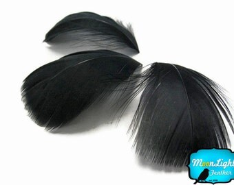 Black feathers, 1 Pack - BLACK Goose Coquille Loose Feathers - 0.35 oz. : 171