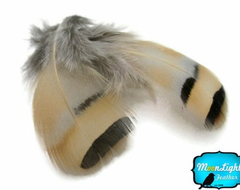 Chukar feathers, 1 Pack - NATURAL CHUKAR PARTRIDGE Hen Feather 0.10 oz. (bulk) : 112