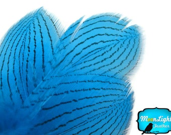 Unique Feathers, 1 DOZEN - BLUE Silver Pheasant Plumage Feathers : 418