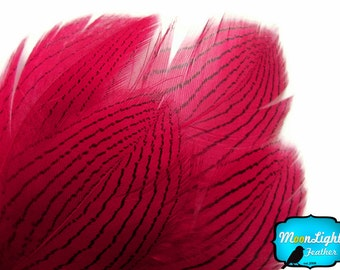 Pheasant Feathers, 1 Dozen - Claret Silver Pheasant Plumage Feathers : 420