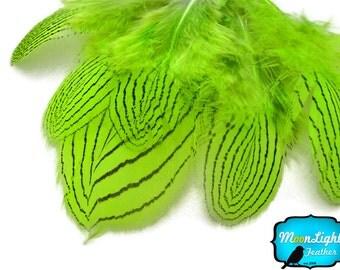 Feathers, 1 DOZEN - LIME Silver pheasant Plumage feathers: 422