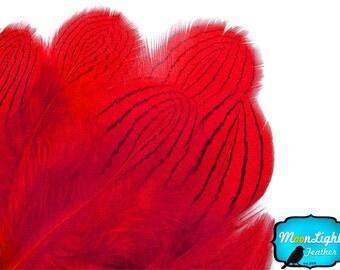 Pheasant Feathers, 1 DOZEN - RED Silver pheasant Plumage feathers: 426