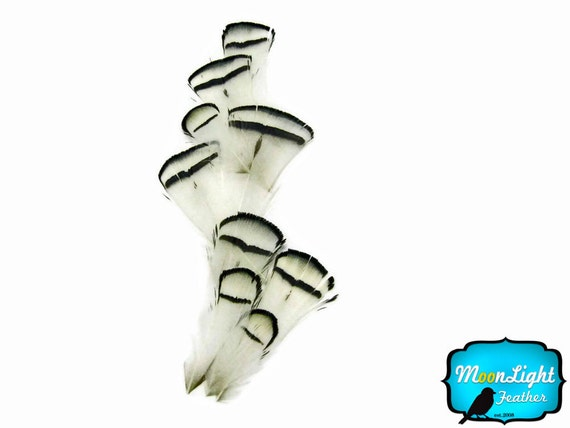 Lady Amherst Feathers, 1 Dozen - NATURAL WHITE Lady Amherst Pheasant tippet Feathers : 393