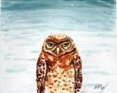 Percy the Grumpy Owl Print