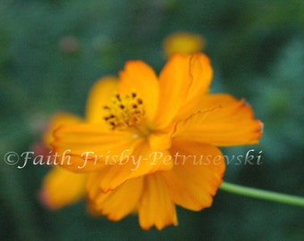 Quietly  Waiting Yellow Flower 5x7 Photograph