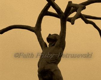 Branch Out Fine Art 5x7 Photograph