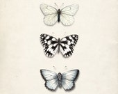 Antique Butterflies Collage - Natural History Art Print No. 1 8x10