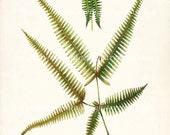 Fern Botanical Study No. 7 Wall Decor Print 8x10