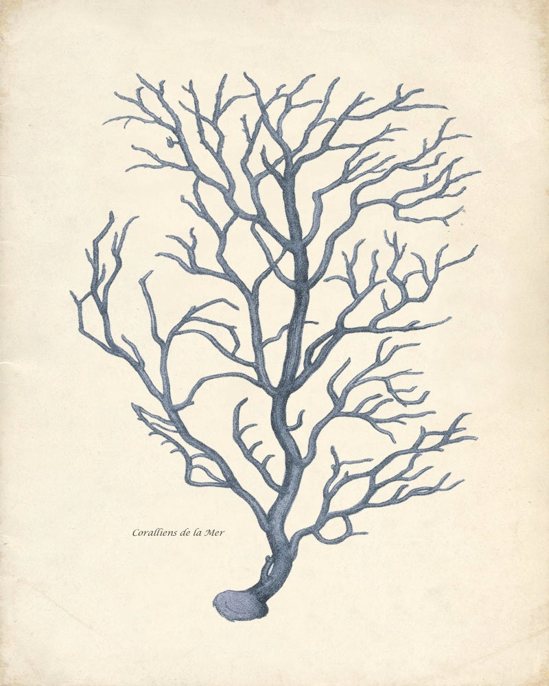 Vintage Blue Branch Coral Wall Decor Print 8x10