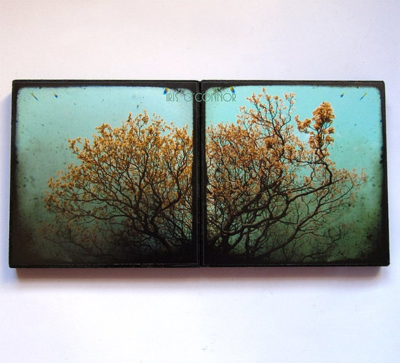 "Set of 2 Photo ttv  Blocks 5"" x 5"" Tree Photography Nature Summer sky"