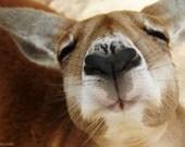 Kangaroo Love - 8 x 10 Fine Art Photography Print