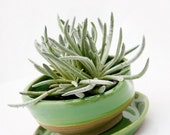 planter with dish in spring green