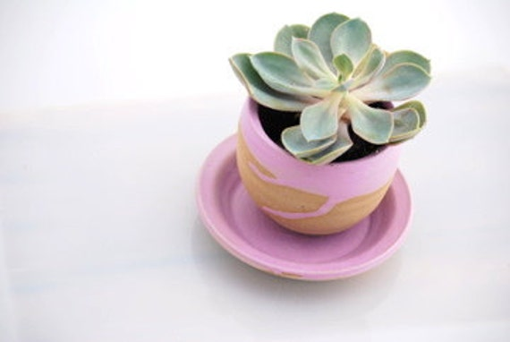 planter with dish in orchid