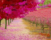 The Orchard,  moss, peach,  joy, inspiration, path, journey, confetti, coral, magenta, fushia, coral