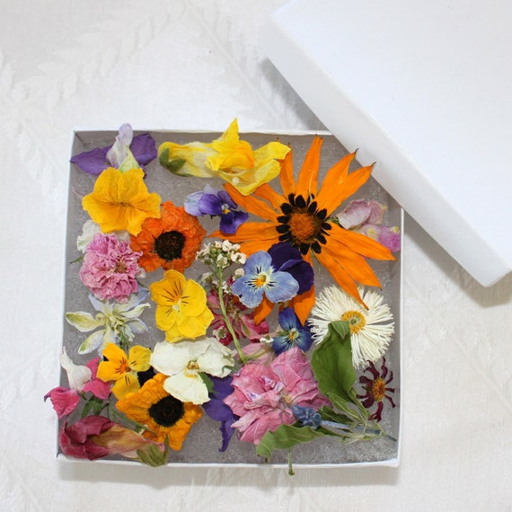 Dry flowers craft supply pot pourri wildflowers daisy for Dried flowers craft supplies