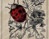 Vintage Ladybugs Printable Instant Digital Download