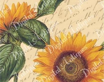 Vintage Sunflower Tags Printable Digital Download
