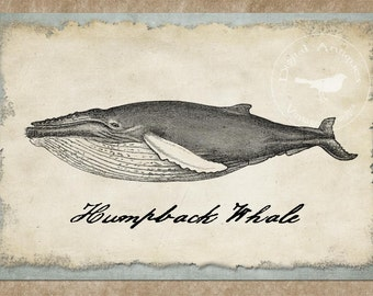 Vintage Whale Images Printable Digital Download