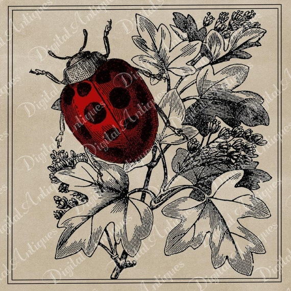 Vintage Ladybugs Printable Instant Digital Download