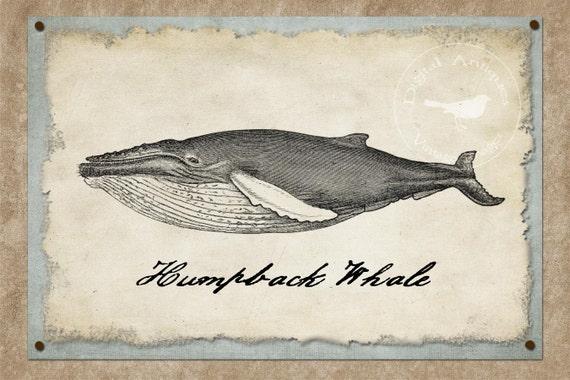 Vintage Whale Images Printable Digital Download