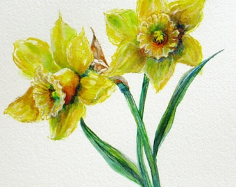 botanical daffodils Original Watercolor Painting realism flowers 9 x 12 fine art