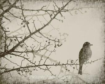 Winter Tree Branch 8 x 10 Art Print, Spring Bird Vintage Style Art, Bare Tree Wall Art, Natural Colors (50)