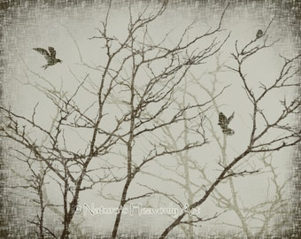 Nature Wall Art, 8 x 10 Print, Eerie Bare Tree Branches, Birds, Vintage Style Print, Earthtone, Winter Tree (51)