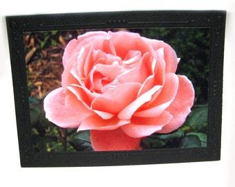 Pink Rose Photo Greeting Card, Rose Photo Art Greeting Card
