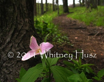 Pink Trillium Flower and Forest Path Photograph  FREE bookmark with purchase