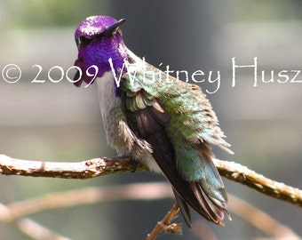 Hummingbird Photograph FREE ooak bookmark with purchase