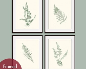 Ferns Garden Botanical Prints (Series D) Set of 4 - Art Prints (Featured in Cream and Thyme Green)