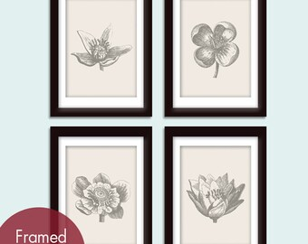 Botanical Flower Bud Prints (Series A) Set of 4 - Art Prints (Featured in Pale French Grey and Charcoal)
