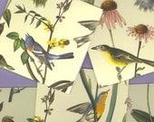 2 table tallies, Audubon birds, yellow background