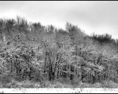CLEARANCE, Black and White Landscape, Winter Trees, Snow, Grey Day Print, 1114 Mat, Wall Art, Nature Photography, Ready to Frame