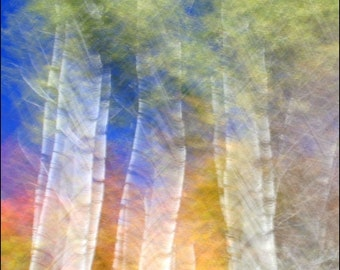 Fall Photography, Abstract, Autumn Colors, Birch Trees,  8X10 Mat, Ready to Frame,  Wall Art