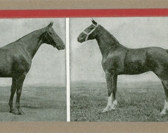 Vintage Horses Bookmark - Laminated
