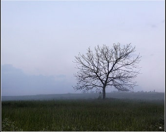 Photography-Lone budding tree on a foggy morning.