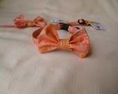 Bowtie Collar For Cats