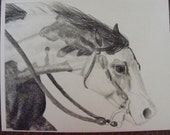 Running Paint horse equine pencil drawing print - matted and framed in green and gold