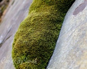 SALE Green moss on rock photography card