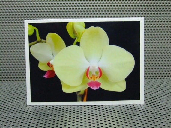 5 MINI Cards - Flower Photography