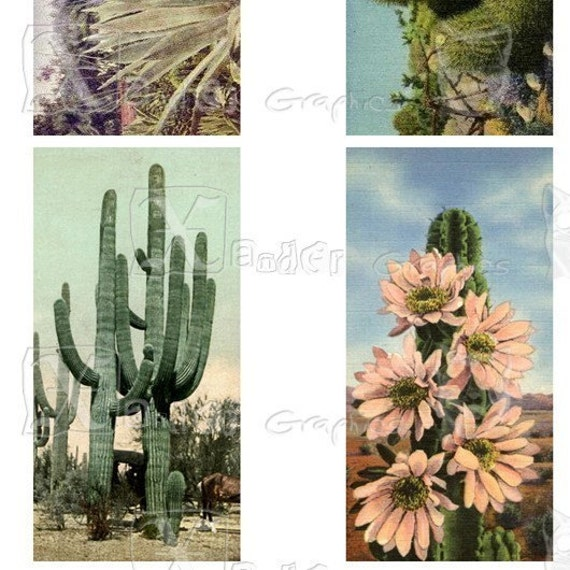 Vintage Cactus -  8.5 x 11 inch Printable Digital Collage Sheet - with 31 images - 15 - 1 x 2 inch domino images and 16 one inch round