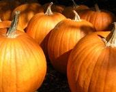 Pumpkins Fall Harvest Autumn October Pumpkin Orange Cabin Rustic Lodge Photography