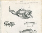 1836, Tobacco Pipe Fish, German Angler, Plate 5, Antique Fish Engraving, T. Bradley, J. W. Lowry